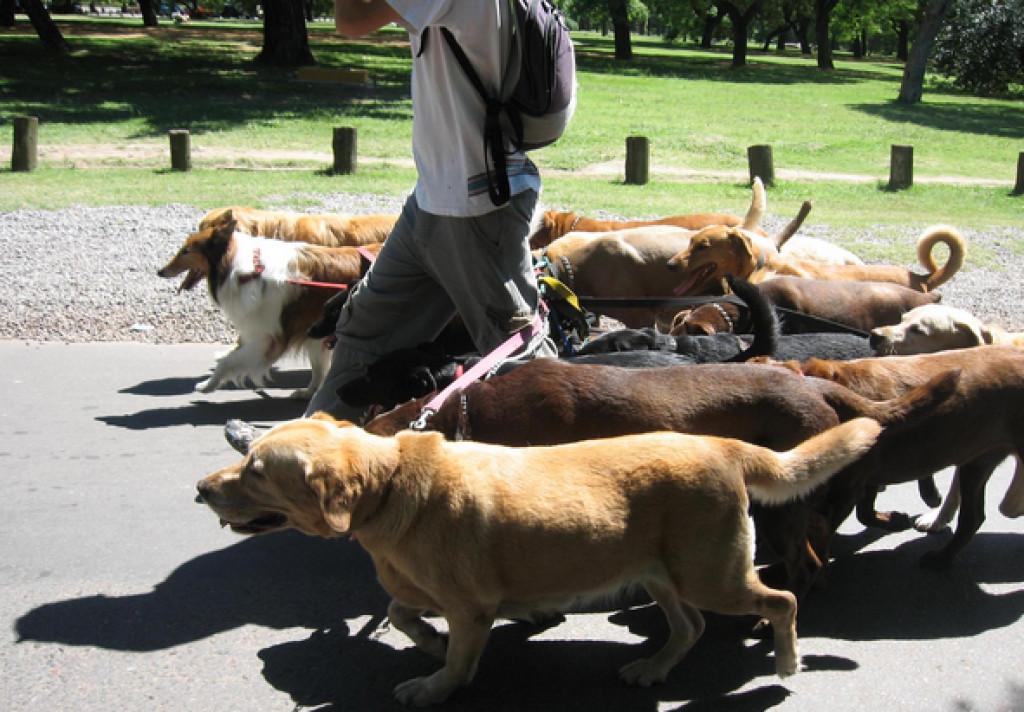 hundepasser